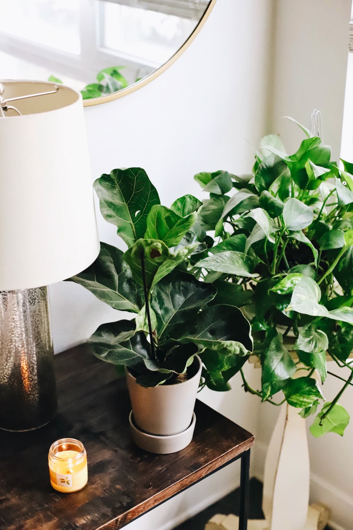 Plants sitting by a window with a brown table and lamp next to them.